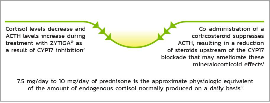 ZYTIGA® and prednisone | The Role of Prednisone